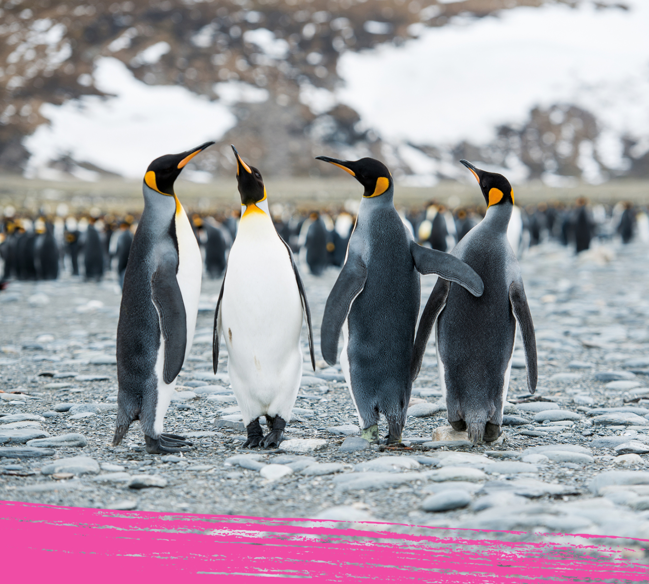 Group of emperor penguin standing close to each other