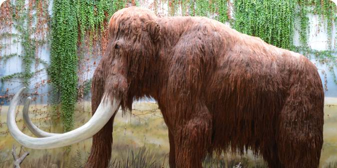 Woolly mammoths
